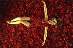 200 Rose Petals or Fall Leaves